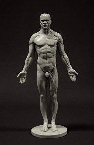 Figurine anatomique d'homme : référence anatomique de 27,9cm pour artistes (grise) de la marque 3dtotal image 0 produit