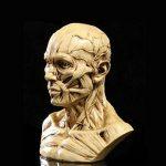 Modèle Humain Crâne Anatomie Muscle Mannequin de Dessin 10cm de Haut Jaune Antique de la marque Générique image 2 produit