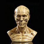 Modèle Humain Crâne Anatomie Muscle Mannequin de Dessin 10cm de Haut Jaune Antique de la marque Générique image 3 produit
