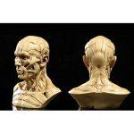 Modèle Humain Crâne Anatomie Muscle Mannequin de Dessin 10cm de Haut Jaune Antique de la marque Générique image 4 produit